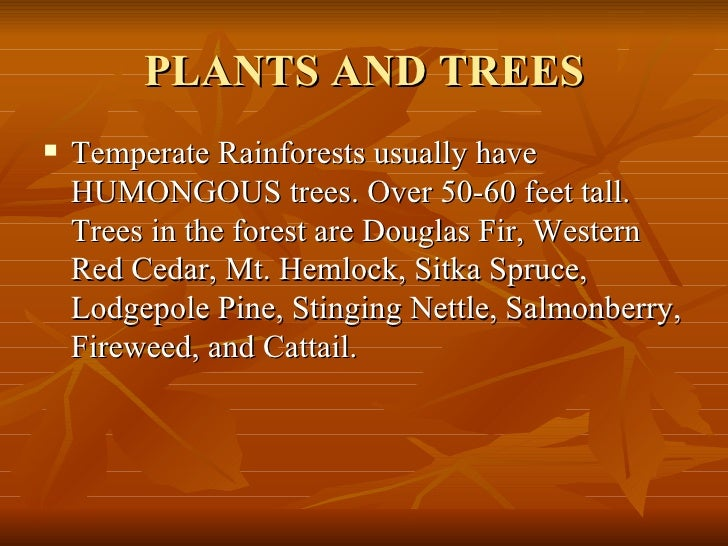 PLANTS AND TREES <ul><li>Temperate Rainforests usually have HUMONGOUS trees. Over 50-60 feet tall. Trees in the forest are...