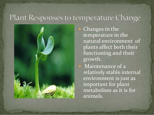 temperature as an ecological factor in plants