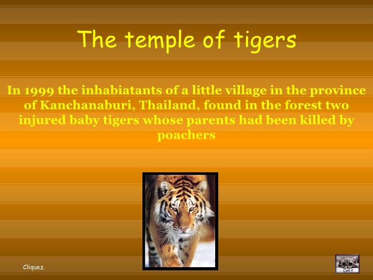 The temple of tigers  In 1999 the inhabiatants of a little village in the province    of Kanchanaburi, Thailand, found in ...