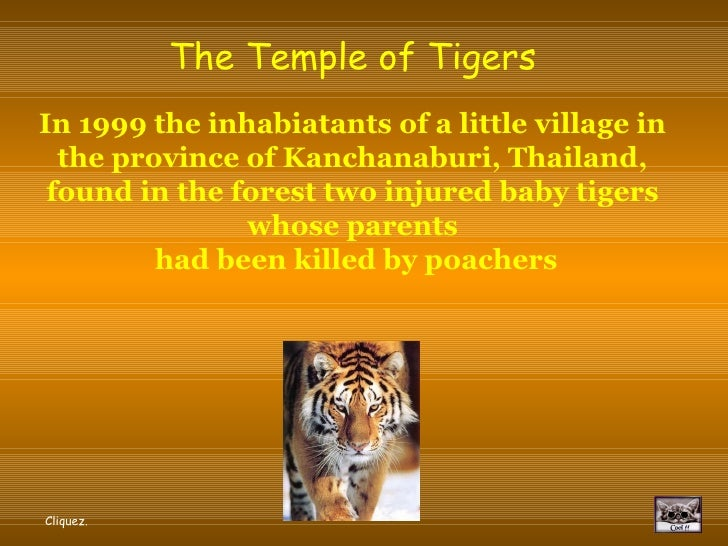 The Temple of Tigers In 1999 the inhabiatants of a little village in the province of Kanchanaburi, Thailand, found in the ...
