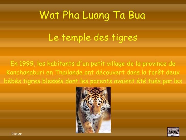 Wat Pha Luang Ta Bua   Le temple des tigres En 1999, les habitants d'un petit village de la province de Kanchanaburi en Th...
