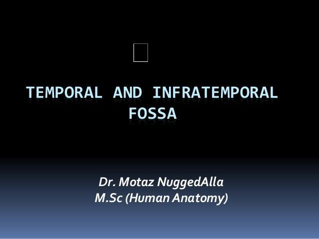 TEMPORAL AND INFRATEMPORAL FOSSA Dr. Motaz NuggedAlla M.Sc (Human Anatomy)