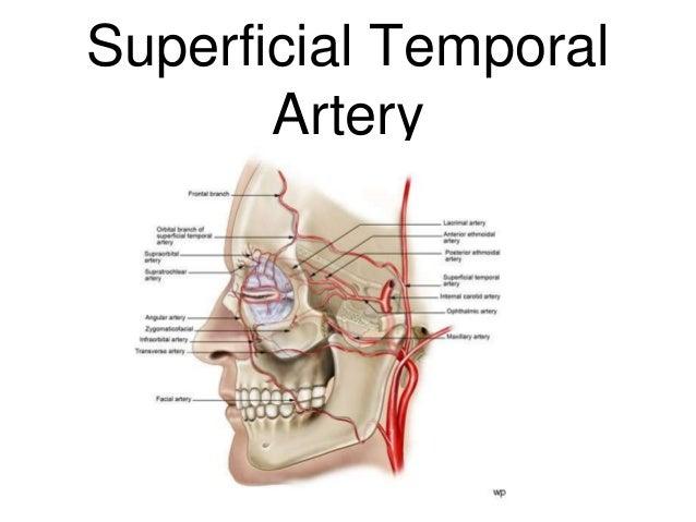 Superficial temporal artery anatomy