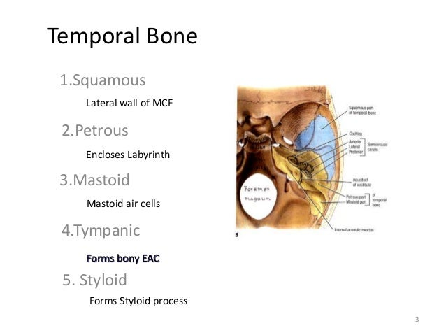 Petrous bone anatomy