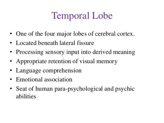 Temporal lobe Slide 2