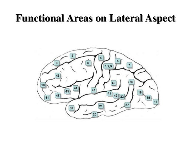 Temporal lobe and its role in psychiatry