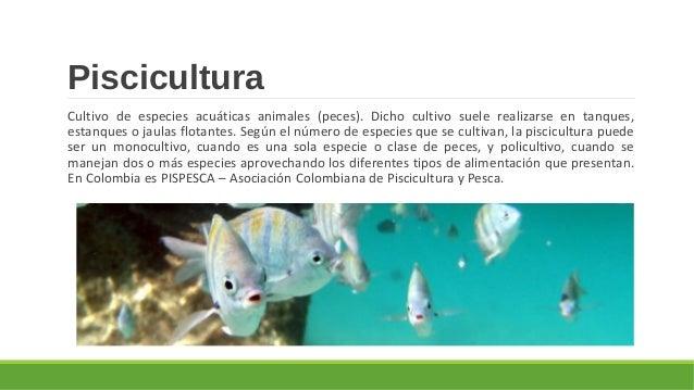 Tem tica 7 agricultura y actividades pecuarias for Jaulas flotantes para piscicultura