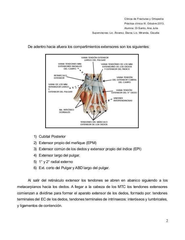 Lesiones de tendones extensores. Tratamiento y rehabilitación