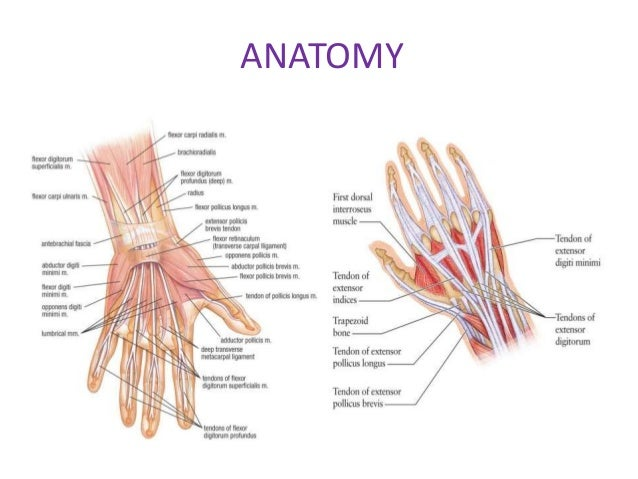 Tendon injuries of hand by Dr Saumya Agarwal
