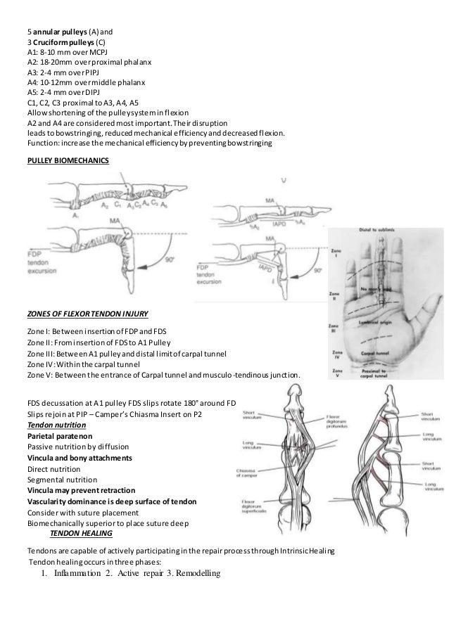 Tendon injury by dr yash