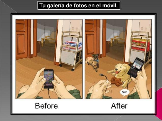 Tener perros en casa cambia la vida de la gente - Perros para tener en casa ...