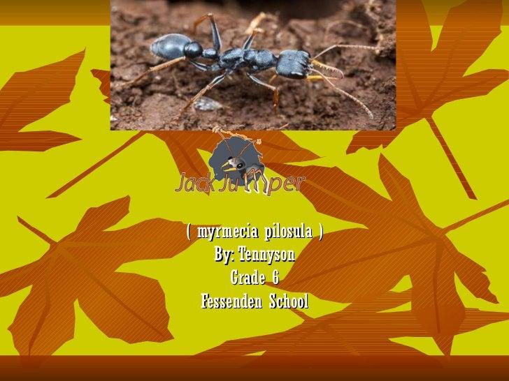 ( myrmecia pilosula ) By: Tennyson Grade 6 Fessenden School