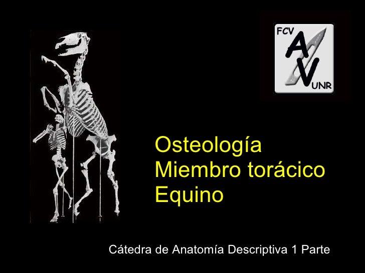 Osteología Miembro torácico Equino Cátedra de Anatomía Descriptiva 1 Parte
