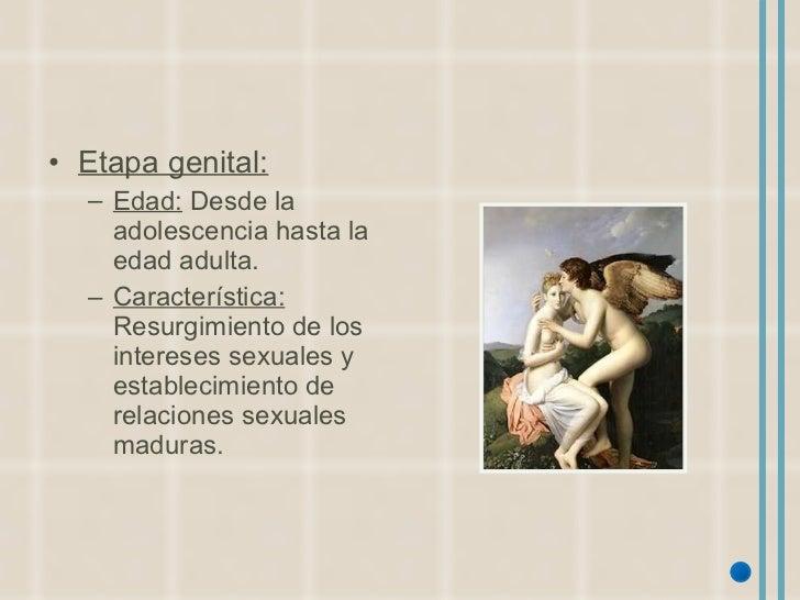 <ul><li>Etapa genital: </li></ul><ul><ul><li>Edad:  Desde la adolescencia hasta la edad adulta. </li></ul></ul><ul><ul><li...