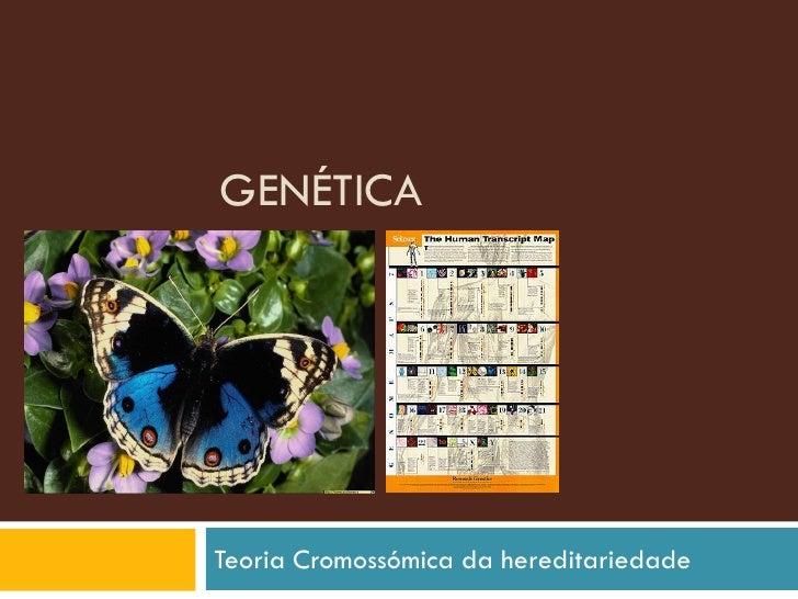 GENÉTICA     Teoria Cromossómica da hereditariedade