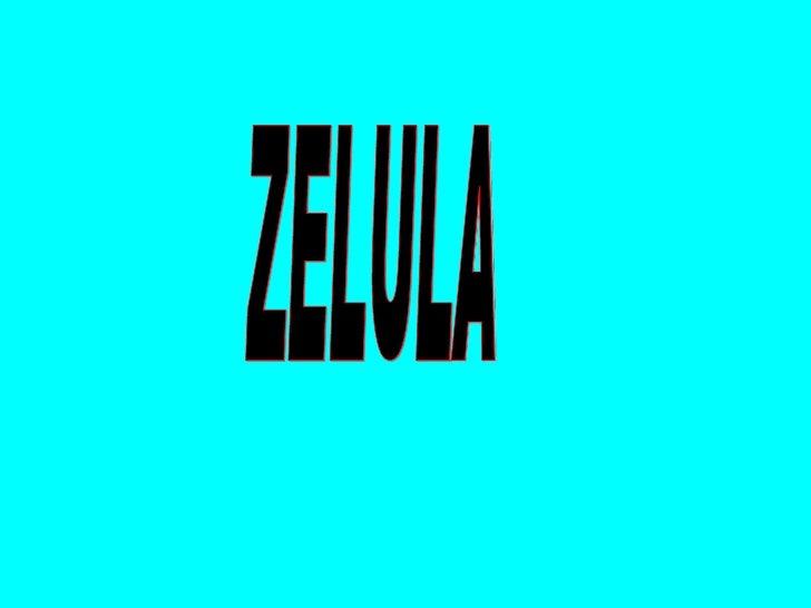 ZELULA