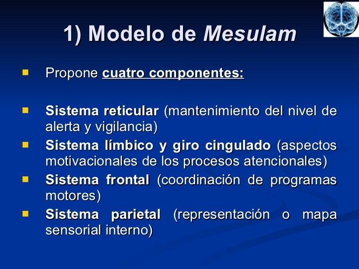 1) Modelo de  Mesulam <ul><li>Propone  cuatro componentes: </li></ul><ul><li>Sistema reticular  (mantenimiento del nivel d...