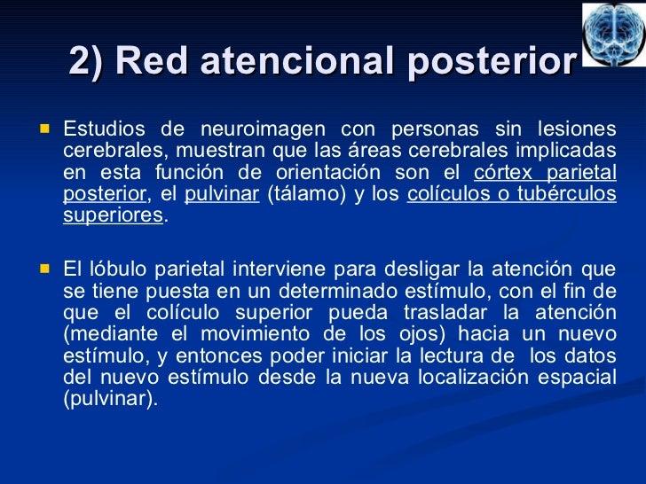 2) Red atencional posterior <ul><li>Estudios de neuroimagen con personas sin lesiones cerebrales, muestran que las áreas c...