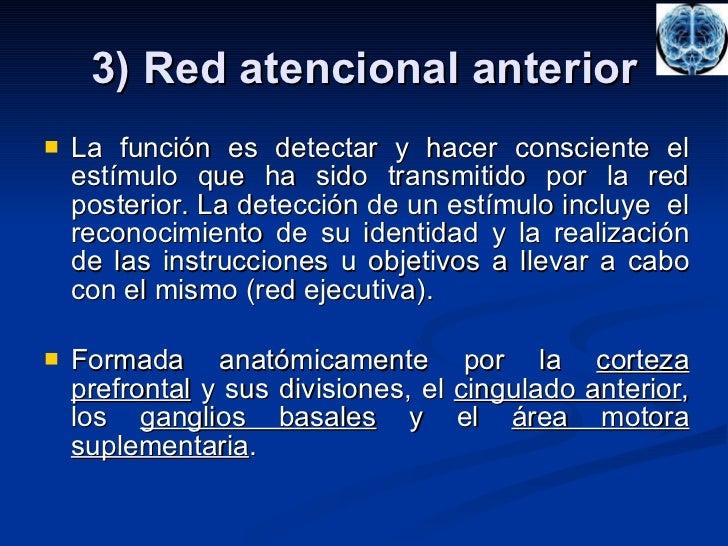 3) Red atencional anterior <ul><li>La función es detectar y hacer consciente el estímulo que ha sido transmitido por la re...