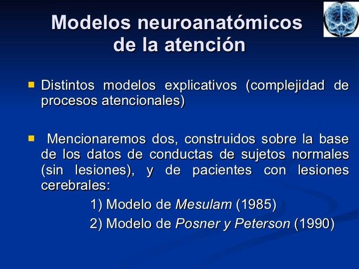 Modelos neuroanatómicos  de la atención <ul><li>Distintos modelos explicativos (complejidad de procesos atencionales) </li...