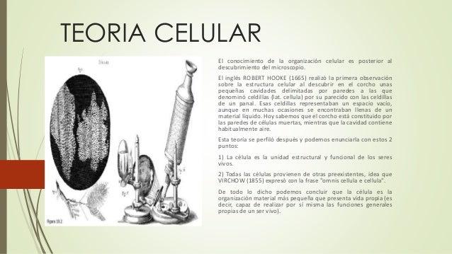 TEORIA CELULAR El conocimiento de la organización celular es posterior al descubrimiento del microscopio. El inglés ROBERT...