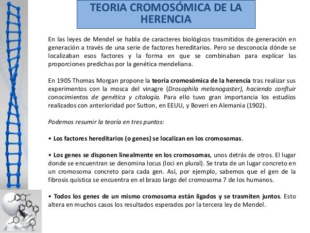 TEORIA CROMOSÓMICA DE LA HERENCIA En las leyes de Mendel se habla de caracteres biológicos trasmitidos de generación en ge...