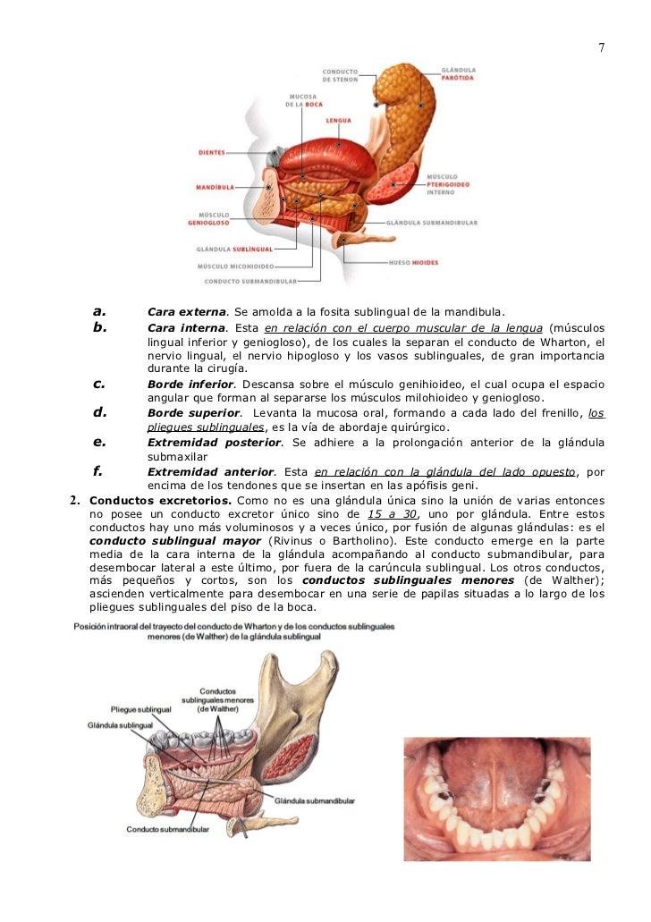 Biopsia das Glândulas Salivares