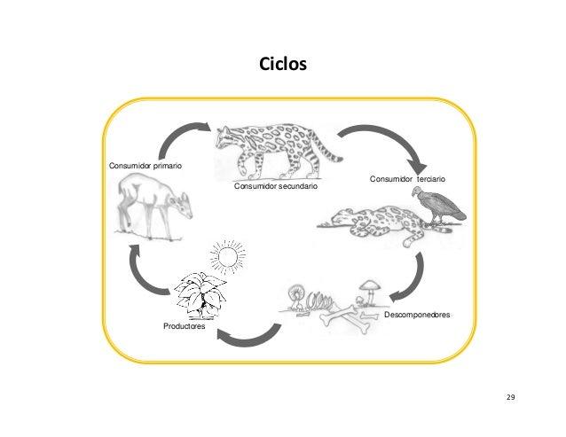 Material Didactico Educación Ambiental Para Escuela Shiroles