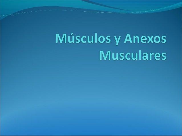Músculos Músculo es cada uno de los órganos contráctiles del cuerpo humano y de otros animales, formados por tejido muscu...