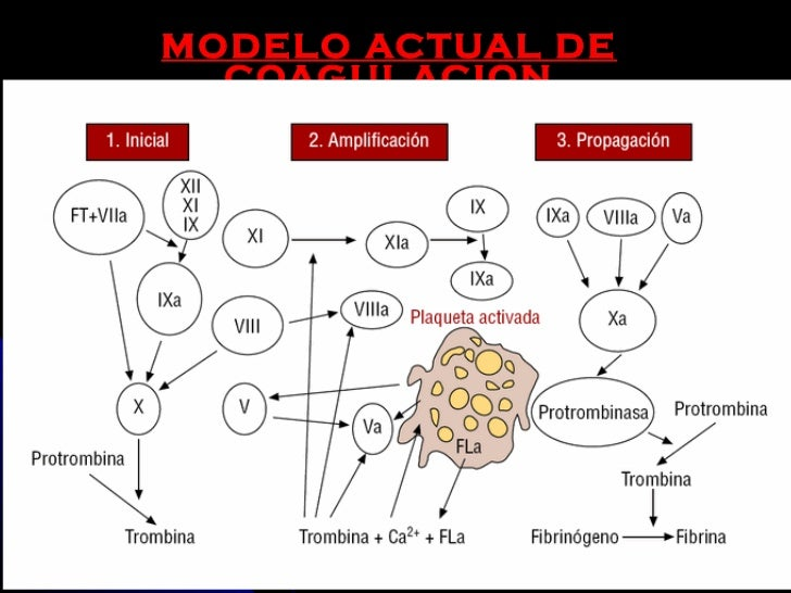 terapia anticoagulante