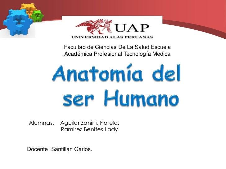 Facultad de Ciencias De La Salud Escuela Académica Profesional Tecnología Medica<br />Anatomía del<br /> ser Humano<br />A...