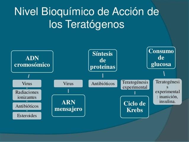 ciclo de esteroides para volumen principiantes