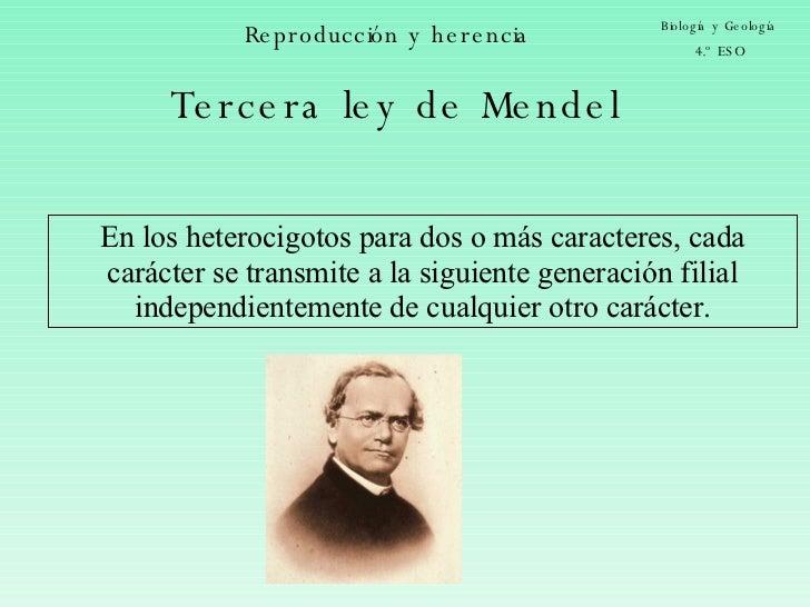 Reproducción y herencia Biología y Geología 4.º ESO Tercera ley de Mendel En los heterocigotos para dos o más caracteres, ...