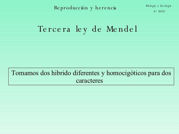 Reproducción y herencia Biología y Geología 4.º ESO Tercera ley de Mendel Tomamos dos hibrido diferentes y homocigóticos p...