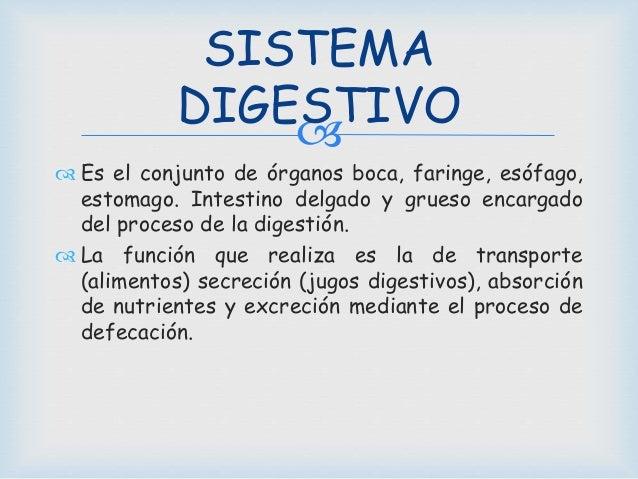   Es el conjunto de órganos boca, faringe, esófago, estomago. Intestino delgado y grueso encargado del proceso de la dig...