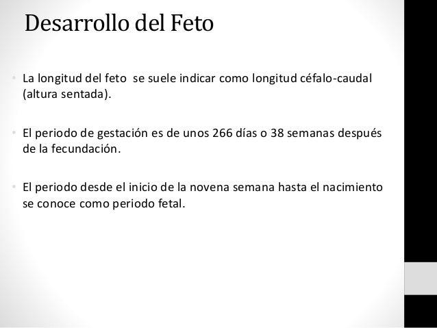 Desarrollo del Feto • La longitud del feto se suele indicar como longitud céfalo-caudal (altura sentada). • El periodo de ...
