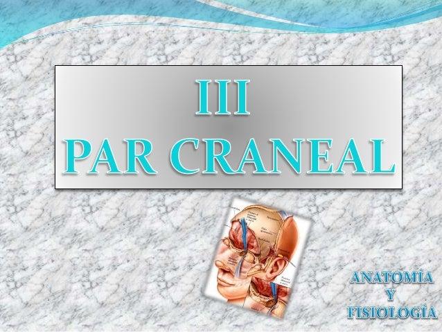 Pares Craneales  Son 12 pares: -10 se originan en el tallo encefálico, pero todos salen del cráneo por agujeros de este m...