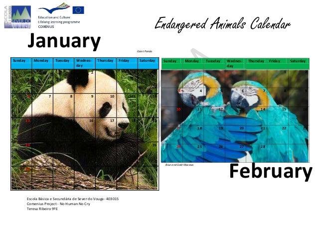 Endangered Animals Calendar         January                                                            Giant PandaSunday  ...