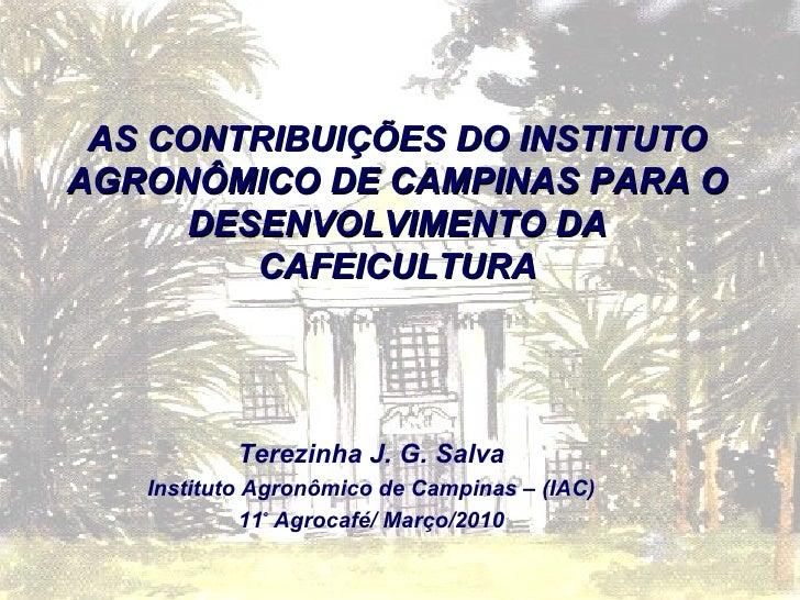 Terezinha J. G. Salva Instituto Agronômico de Campinas – (IAC) 11 º  Agrocafé/ Março/2010 AS CONTRIBUIÇÕES DO INSTITUTO AG...