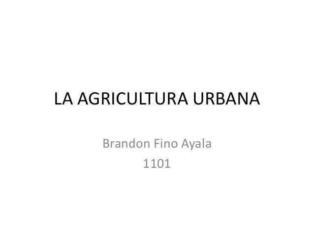 LA AGRICULTURA URBANA    Brandon Fino Ayala          1101