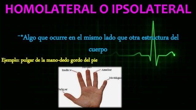 Anatomia basica humana