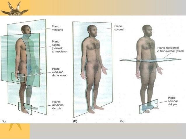 Anatomía - Terminología Ejes y Planos