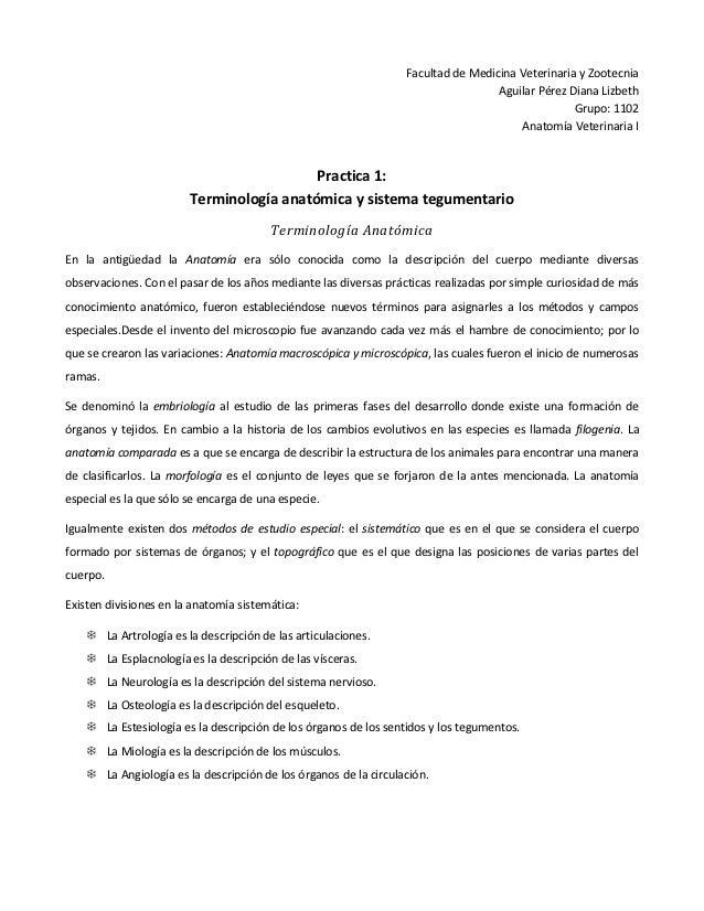 Terminología anatómica y sistema tegumentario practica 1