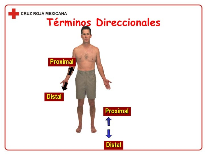 TerminologíA MéDica, TéRminos De DireccióN Y LocalizacióN