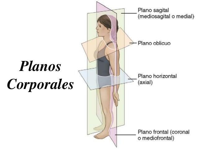 Terminología sobre Posiciones Radiológicas