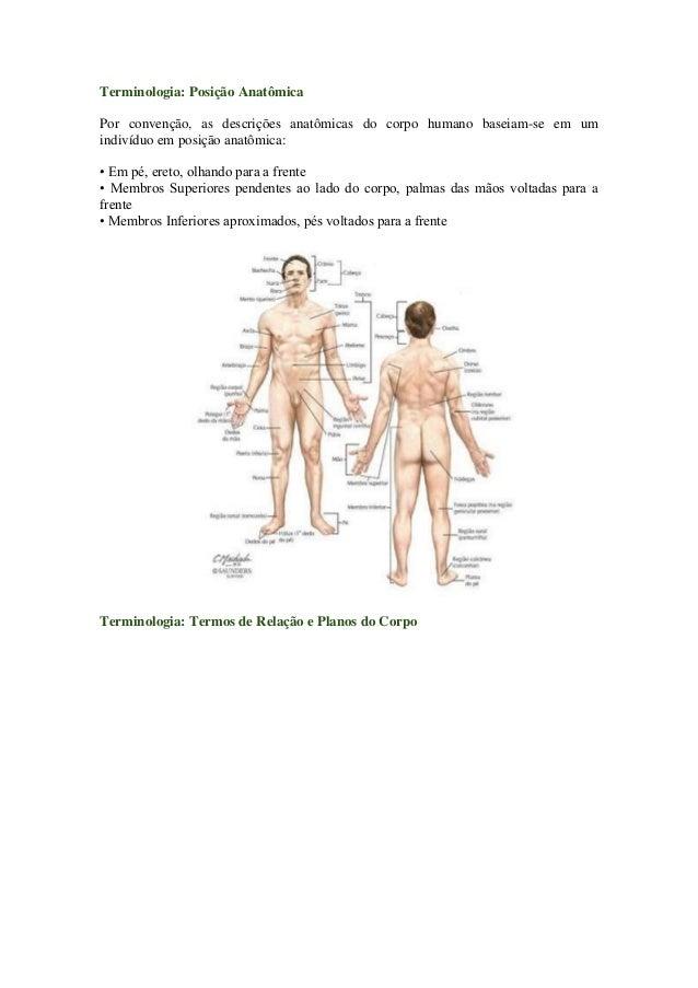 Terminologia: Posição AnatômicaPor convenção, as descrições anatômicas do corpo humano baseiam-se em umindivíduo em posiçã...