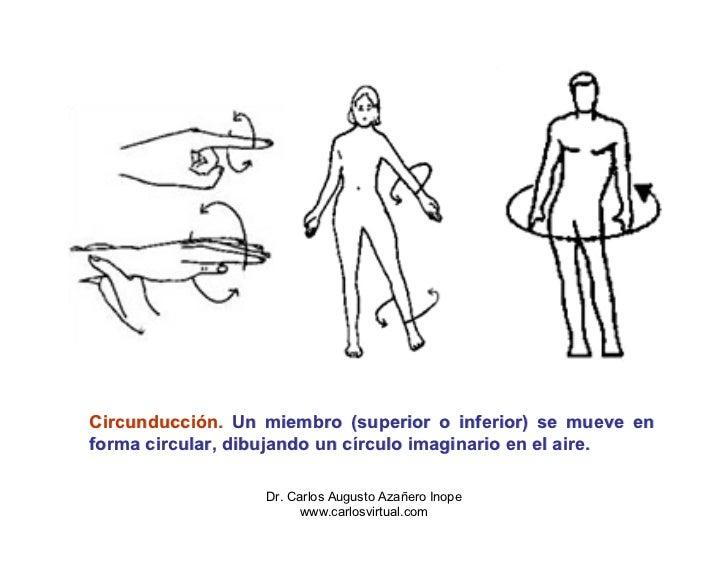 Dorable Extensión De Definición De La Anatomía Patrón - Anatomía de ...