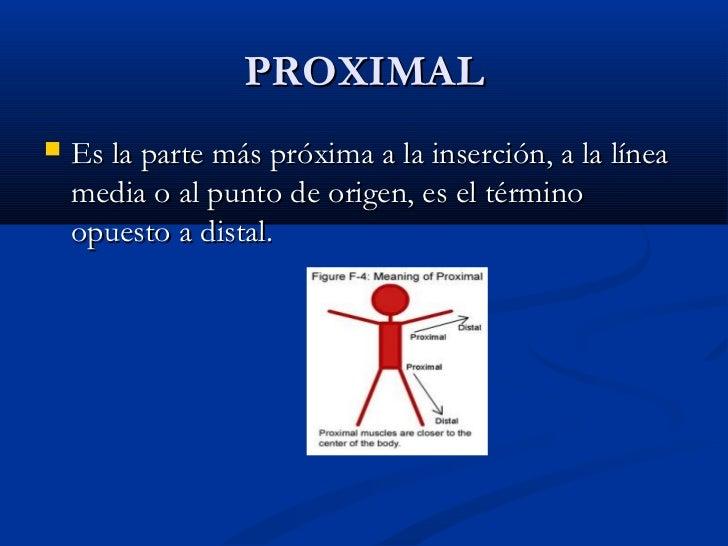 Terminologia anatómica