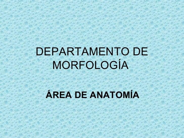 DEPARTAMENTO DE  MORFOLOGÍA ÁREA DE ANATOMÍA