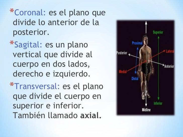 Moderno Qué Significa Distal En La Anatomía Motivo - Anatomía de Las ...